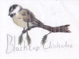 Black-cap Chickadee by xMissLovelessx