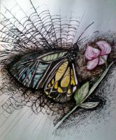Butterfly in the web by julie995
