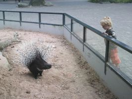 Small child watching porcupine by Reinder