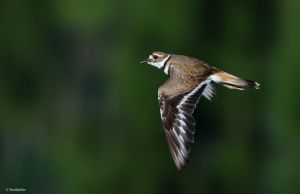Fly-by Shooting by TerribleTer