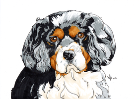 Cody Dawg! by SweetIllustrations