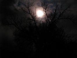 Moonlight Through Trees 8 by DarkMaiden-Stock