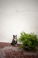 lonesome cat by lalofee
