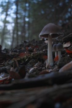 On the Forest Floor by PlanetaryButterfly