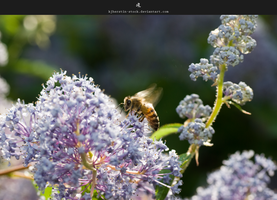 Bee Collecting Pollen by stockkj