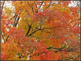 The Variety of Colour by Michies-Photographyy