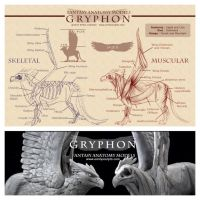 Gryphon Anatomy Chart by emilySculpts