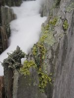 Moss and Snow by r-a-i-n-y