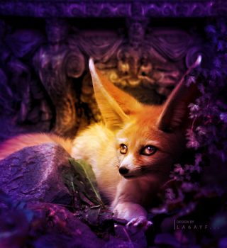 Fennec Fox by la6ayf
