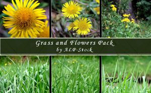 Grass and Flowers PK by ALP-Stock