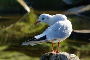 the day i pissed off a gull by foxxtrot