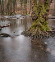 Forest of Dean 2 by LughoftheLongArm
