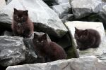 The Feral Kittens by kindlight