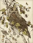 Great Horned Owl by teaganwhite