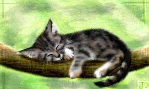 Kitty On A Branch by magpi