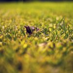 grassy.low by ninjatogo