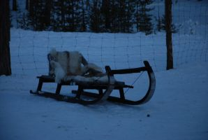 Reindeer Sledge by LimeStock