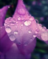 Pink waterdrop by Fluessiges-Feuer