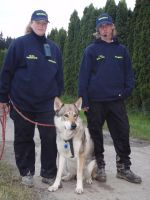 czech wolfdog Ben 14 by Blondlupina