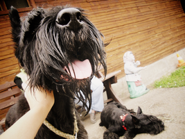 .nice dog ^_^. by Aquilions