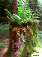 Forest stump by Andenne