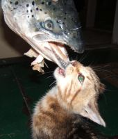 cat vs fish 2 by poupon82