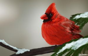 Red bird by Katie1Grenier