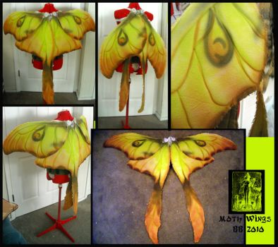 Moth Wings by Magpieb0nes