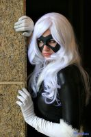 Black Cat - Lurking by superiorshoe