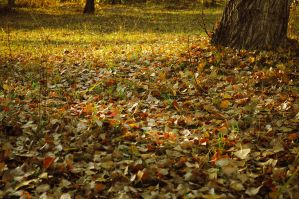 autumn leaves by Tumana-stock