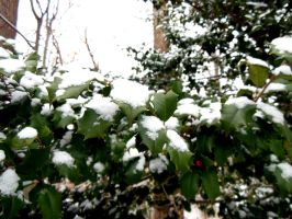 And Snow by Daemare