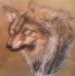 The Sacred Wolf by angeleyes122369
