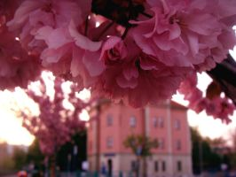 We all love pink, don't we by jirkam