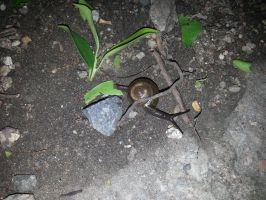 Snail 24Oct2014 3 by RiverKpocc