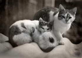 cat family by FairyCat60s