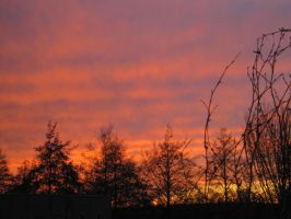 29-11-09 Sunset by Herdervriend