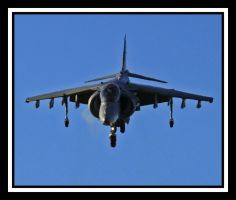Harrier Bowing by lizzyr