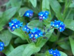Forget me not by UncreativeCreativity