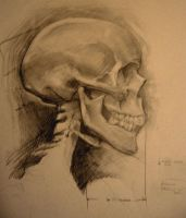 Skelly Skull Study One by kphillips