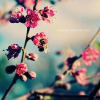 bee on blossom by nhuthanh