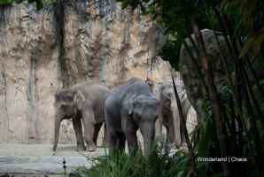 Elephant Tribe by Evanescent-Chaos