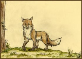 what does the fox say? by muscardin