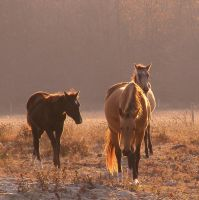 Horses in the Light by LadyAyslinn