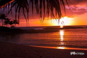 Hawaiian Light by Milton-Andrews
