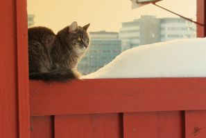 Resting Cat by marichris
