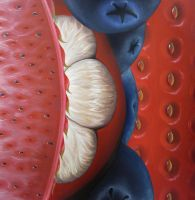 Abstraction of Fruits by EnsanguinedPenguin