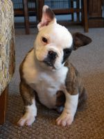 Evelyn the Dwarf by NobleBulldogges