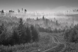 Morning Fog by Les-Piccolo