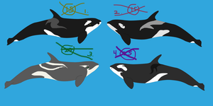 Another Orca adoptables set-CLOSED by GypsySkye