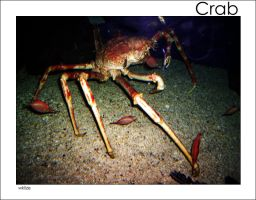 Crab by WKLIZE